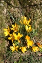 yellow flowers2 -