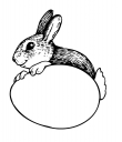 rabbit_2.png