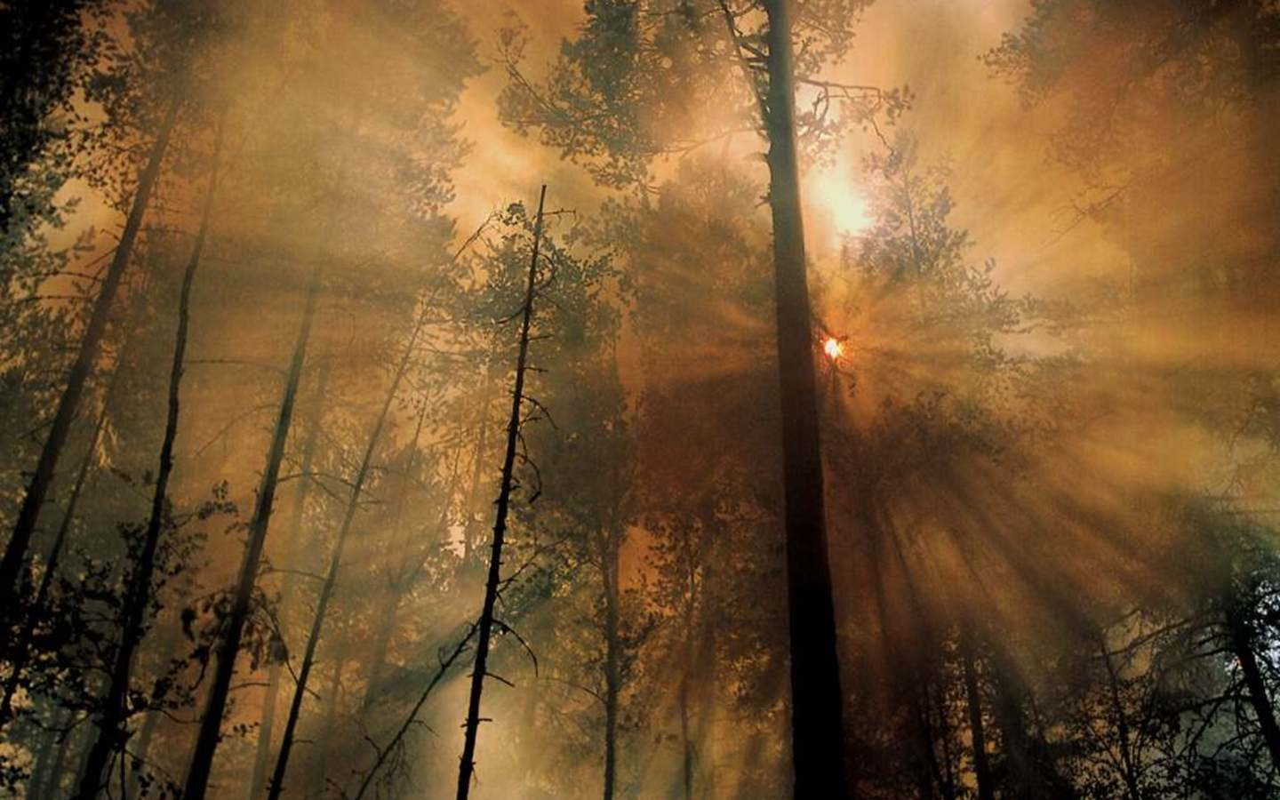 http://media1.wgz.ro/images/media1:4bffc91a76f24.jpg/_nature_Forest_Fire_the_Morning_After.jpg