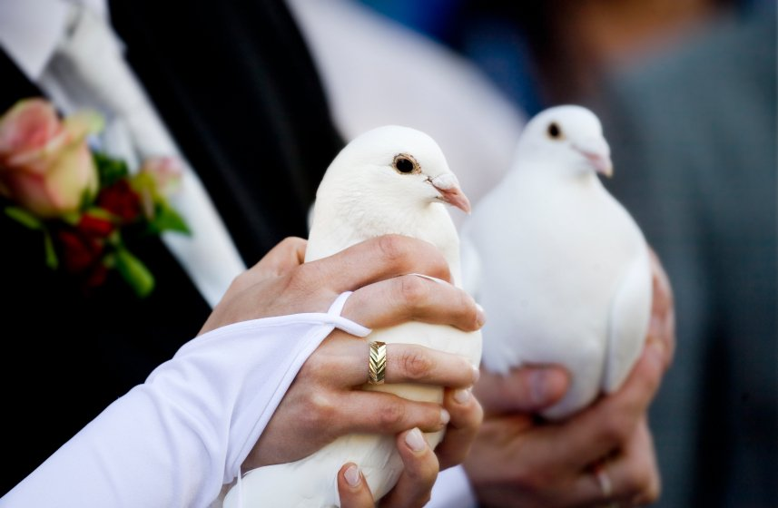 wedding%20doves.jpg